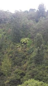 20140419 rangitoto tree fern